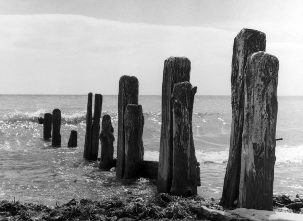 A study of the old groyne (a low wooden wall or barrier built into the sea from a beach), Worthing, Sussex, England. Date: 1960s