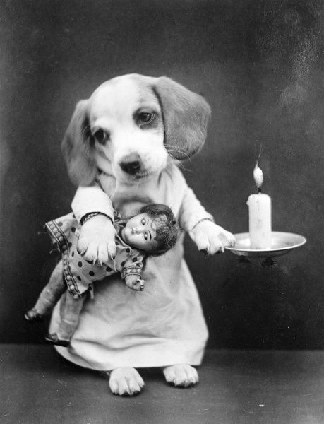 A beagle puppy with a candle and holder, about to retire to bed, with a doll under one arm. Date: early 1930s