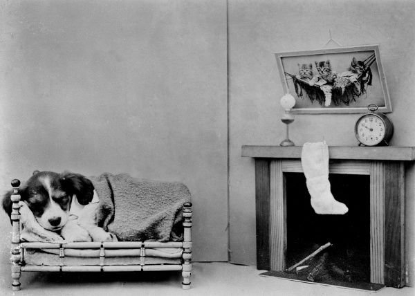 A beagle puppy sleeps on a sofa beside the fire, with his Christmas stocking hanging over the mantlepiece in aniticipation of a visit by Father Christmas. Date: early 1930s