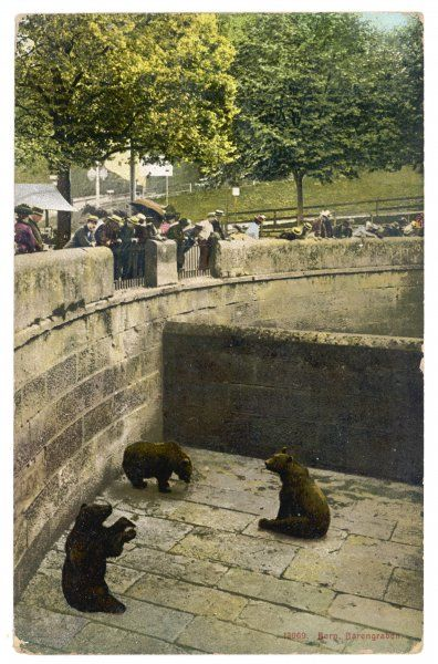 Bears in their 'pit' at Bern Zoo, Switzerland