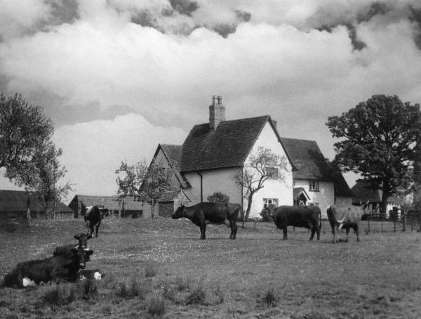 A charming old farmhouse at Great Barford, Bedfordshire, England. Date: 1930s
