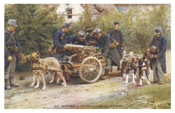 During World War One, the Belgians harness their dogs to machine guns instead of milk carts