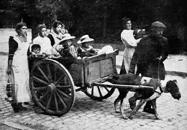 A Belgian peasant family with a dog-drawn cart, walk into Brussels after fleeing their homes in the wake of the German invasion of 1914