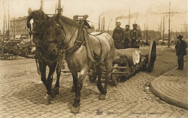 Belgium - Antwerp - working horses on the dock. Here this horse team transport a set of barrels along the cobbled quayside streets