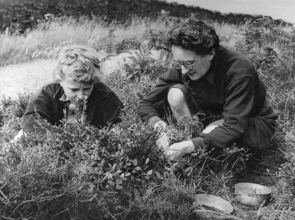A woman wearing spectacles picking bilberries with a girl with short blonde hair. Date: 1950s