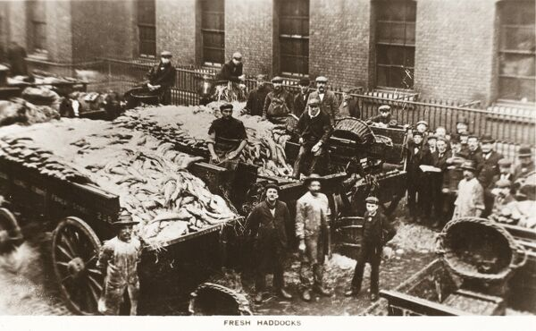 Fresh Haddock brought to Billingsgate Fish Market in London on large wagons Date: 1912