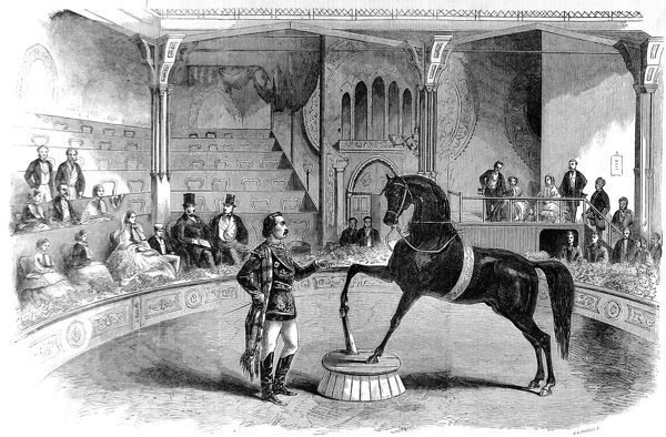 Engraving showing the American trick-horse 'Black Eagle' performing at Howes and Cushing's 'Great United States Circus' at the Alhambra, Leicester Square, London, 1858