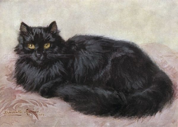 A black Persian cat. Date: 1903