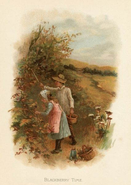 Two children picking blackberries in the Summer