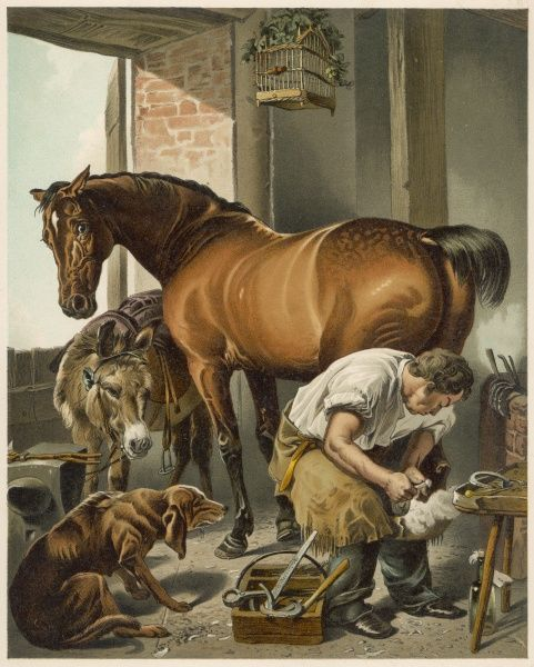 A blacksmith puts a new shoe on a bay mare