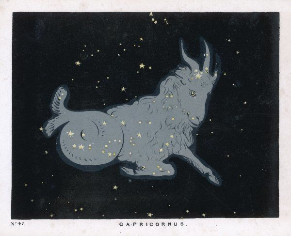 The constellation of Capricorn, this version has the head, shoulders and fore- legs of a goat and the hind body and tail of a fish