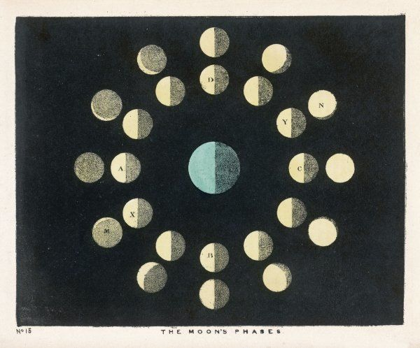 The moon's phases