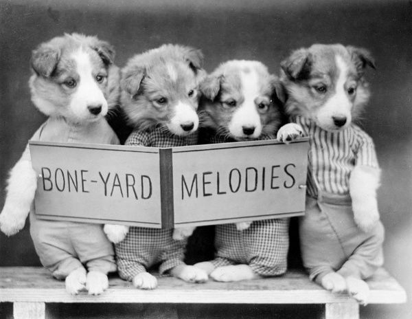 Four puppies dressed as humans, singing 'Bone-yard Melodies' together. Date: early 1930s