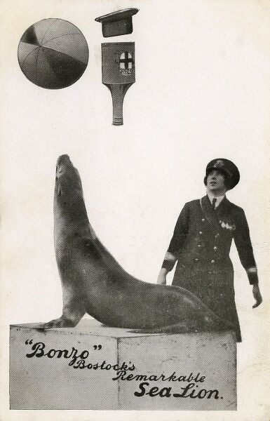 Bonzo a remarkable performing Sea Lion at Bostock and Wombwell's Travelling Circus - pictures with trainer Zetta Hills Date: circa 1926