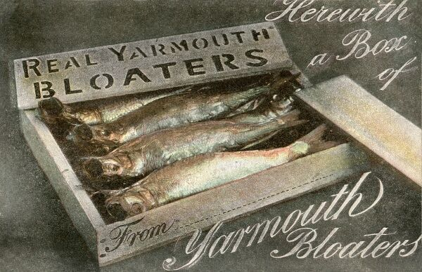 A box of Real Yarmouth Bloaters -- delicious! circa 1916