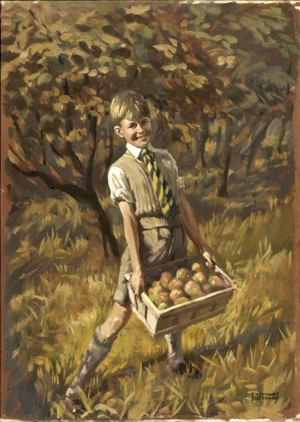A smiling, happy boy amongst the orchard trees, collecting the fallen shiny English apples in a wooden box. Painting by Raymond Sheppard