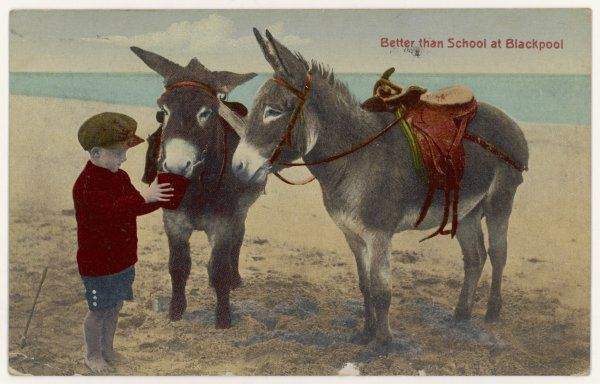 A boy makes friends with two donkeys on the sands at Blackpool