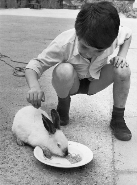 A little boy feeds his rabbit