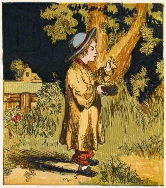 A Victorian boy with a nest and chicks he has taken from the tree