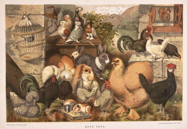An illustration of a selection of domestic pets and farm animals