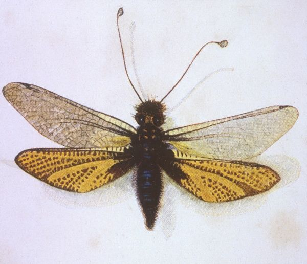The Brazilian bee. Date: 1901