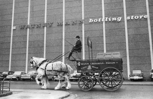 Shire horses and dray of the Albion Brewery (Mann, Crossman and Pailin Ltd.), outside thed Watney Mann bottling store, London