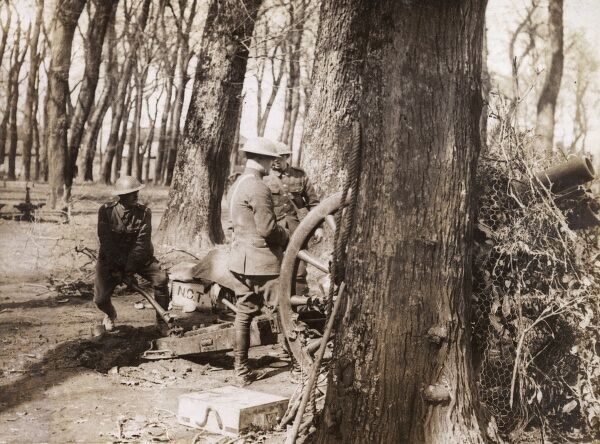 British artillerymen with their field gun set up in a wood, somewhere on the Western Front during the First World War. Date: 1914-1918