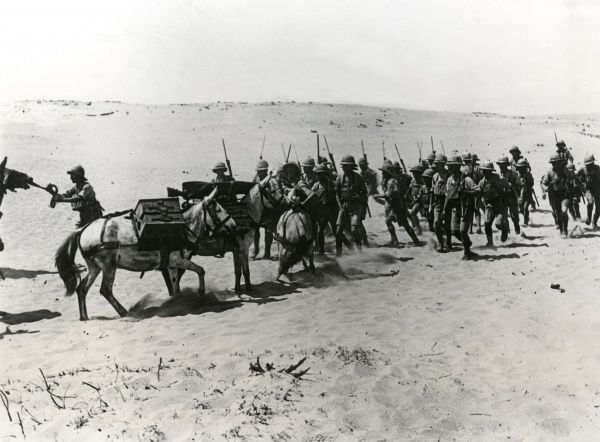 British troops at Arsuf, Middle East (now in Israel) on the Mediterranean coast during the First World War. Showing the Lewis Gun Section of the 2nd Leicestershire Regiment, 7th (Indian) Division, with their mules. Date: summer 1918