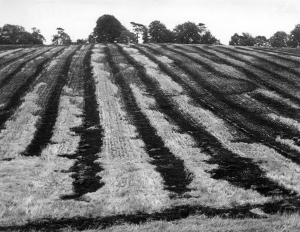 Burnt-off stubble in the fields of a British farm, after harvesting. Date: 1960s