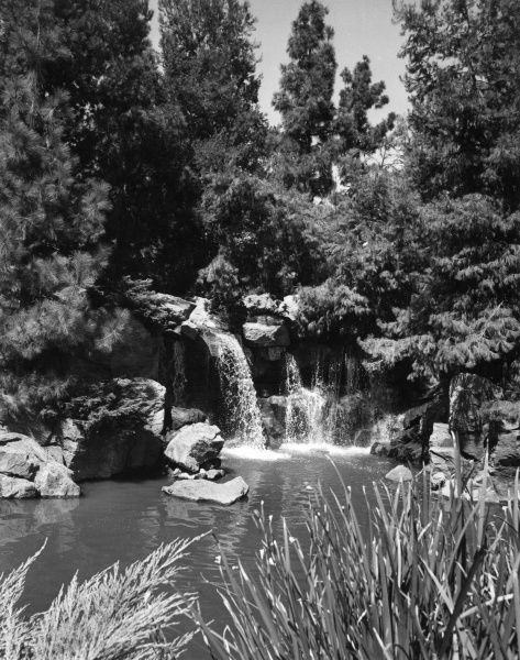 One of the waterfalls in Busch Gardens, California, U.S.A. Date: late 1960s