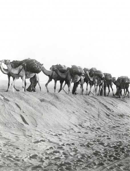A camel convoy at Shellal, a village on the Nile, south of Aswan, Egypt, during the First World War. Date: 1918