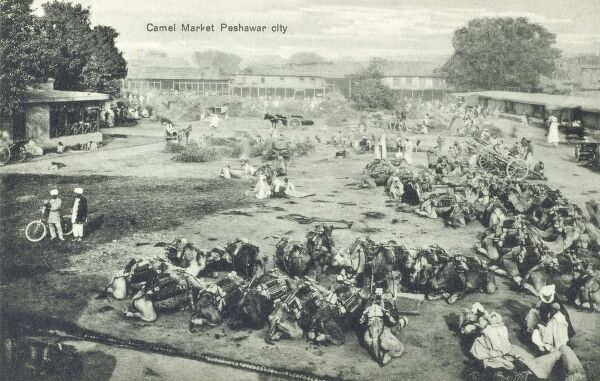 The Camel Market at Peshawar, NWFP (now in Pakistan). Date: circa 1920