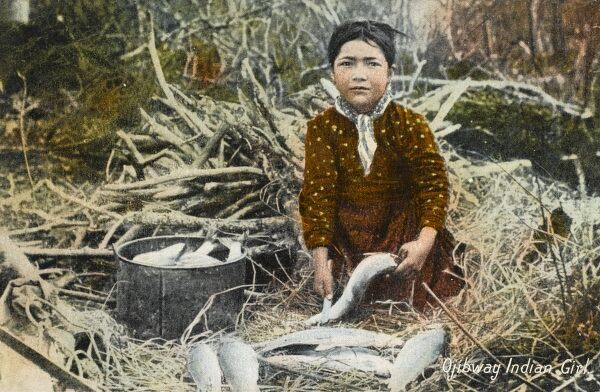 The Ojibwa is the largest group of Native American peoples north of Mexico. They are equally divided between the United States and Canada. Here an Ojibwa girl de-scales a large pile of fish ready for the pot