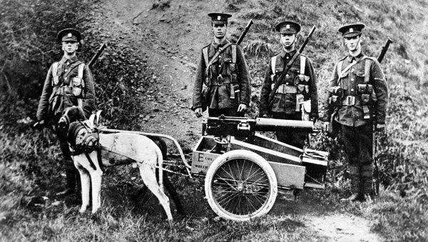 Captain H. Furber, of the 3rd Batt. Welsh Regiment, experiment in dog traction for machine guns