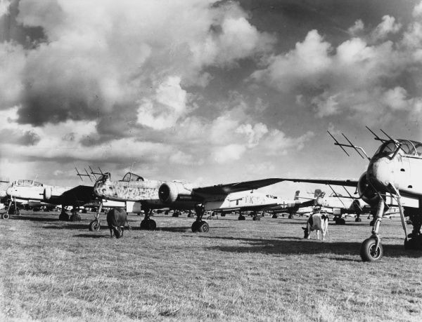 A strange sight in a field in England: Cattle grazing amongst German Heinkel 219 aeroplanes, captured during World War Two
