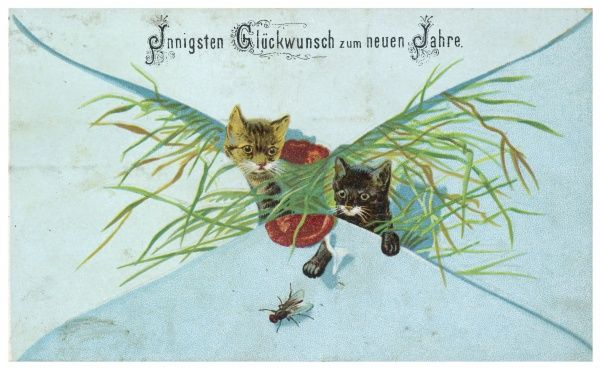 Two kittens, who have been sealed inside an envelope with some greenery, peer out in astonishment at a fly... a typical German Christmas scene