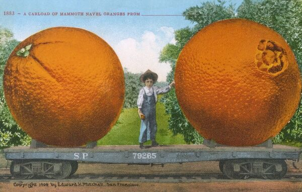 A frankly ridicuolous carload of Mammoth American Navel Oranges! Date: 1909