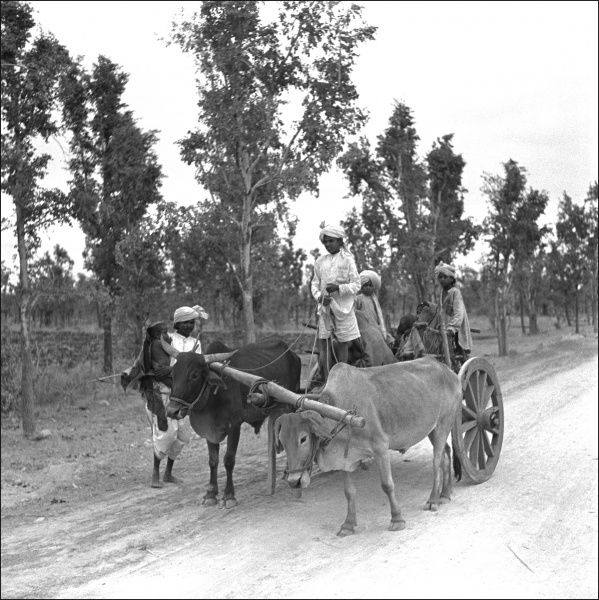A cart pulled by two oxen, with four men, in Madhya Pradesh Province, India. Photograph by Ralph Ponsonby Watts