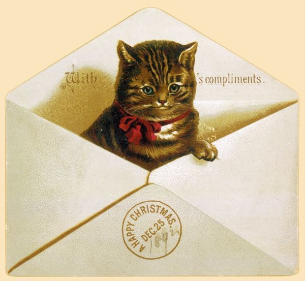 A kitten pops its head out of an envelope