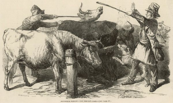 Engraving showing a pair of cattle drovers and their animals at Smithfield Market in London, 1849