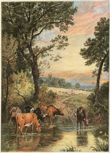Five cows drink from a stream, while a flock of sheep head in their direction from the village whose church spire can be seen in the distance