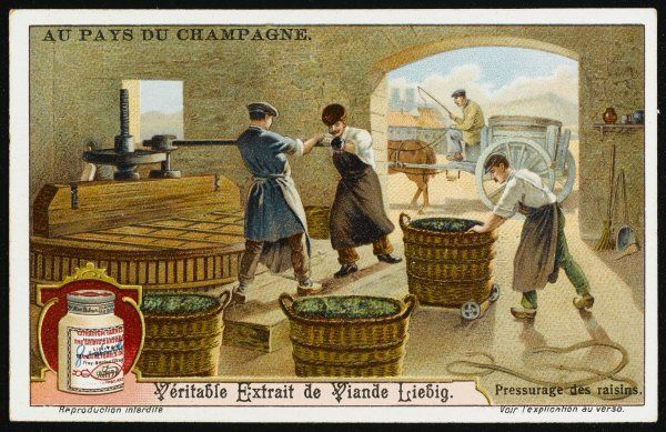 Pressing the grapes card 3 of 6