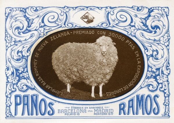 A fine Romney Marsh Sheep from New Zealand bought for 50,000 pesetas by Spanish breeders at a London Stock Show! Date: circa 1910s