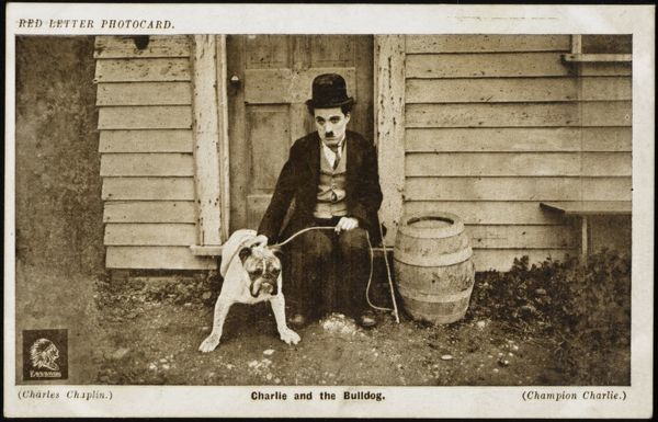 CHARLIE CHAPLIN (Sir Charles Spencer) English comedian and actor with a bulldog in the film Champion Charlie