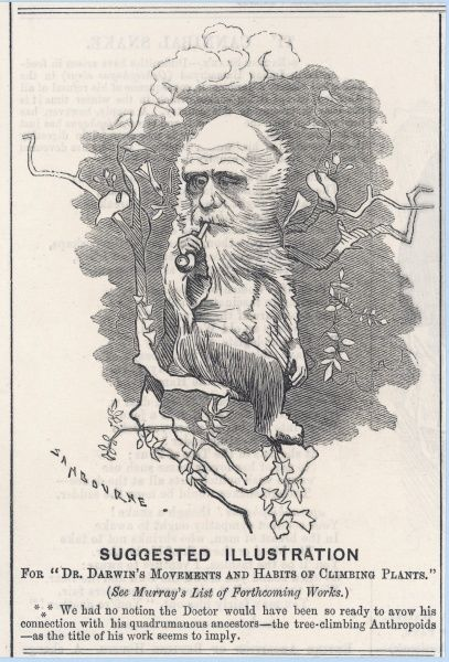 Charles Darwin depicted as a tree-climbing anthropoid