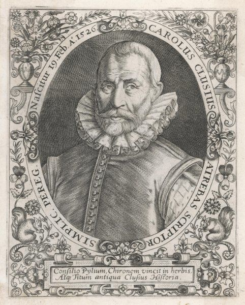 CHARLES DE L'ECLUSE (Latin: Carolus Clusius) French/Dutch naturalist; credited with introducing the potato to Europe