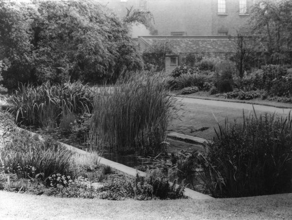 A corner of the water garden at Chelsea Physic Gardens, London, England. Date: 1960s