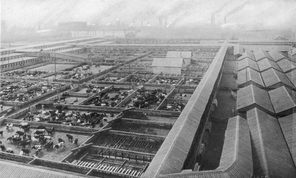 Bird's-eye view of the Chicago stockyards, where 25,000 people are employed to butcher the animals