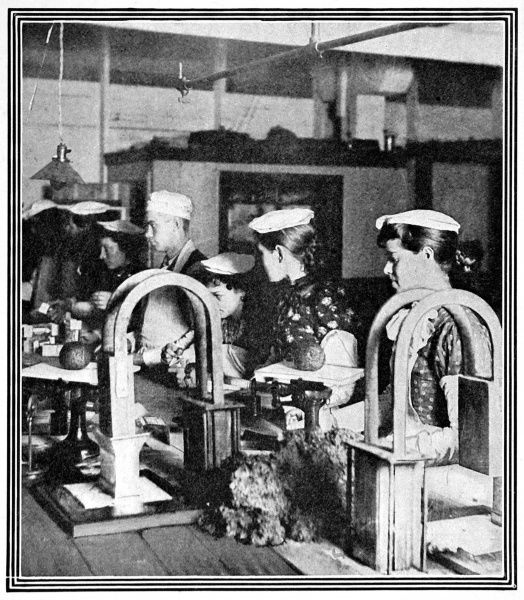 Delicacies weighed and packed in Armour's Packing-House in Chicago, showing some dubious by-products of a Chicago meat processing factory used for making cheap sausages