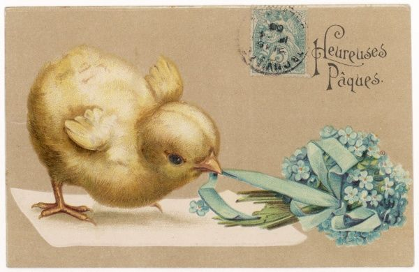 A chick tugs at the ribbon of a posy